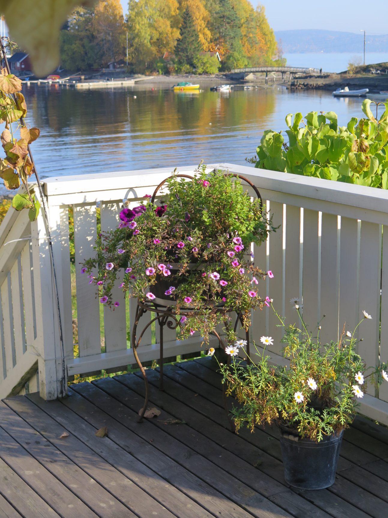 Blomstene lever fortsatt på verandaen her i slutten av oktober - om enn litt slitne ;.)